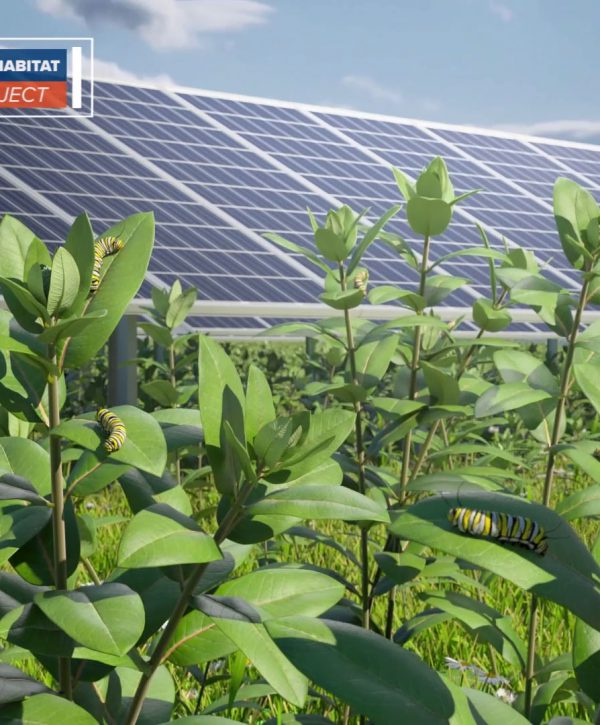 EDF – Integrating biodiversity and agriculture on its New York solar sites